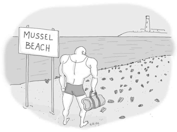 10-14-16-mussel-beach